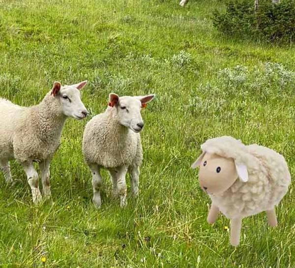 Bilde av Sau av tre med hvit ull, stor, furu